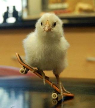 skateboarding-chick